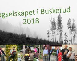 2018 i Buskerud – Stappa med aktiviteter og skog!