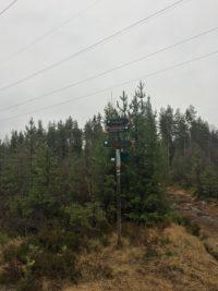 Skogens mangesidige betydning – hvordan unngå interessekonflikter?