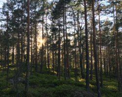 Årsmøte med fagprogram 4. juni – Oslo og Akershus